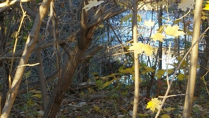 Peeking through the bushes - iGallery