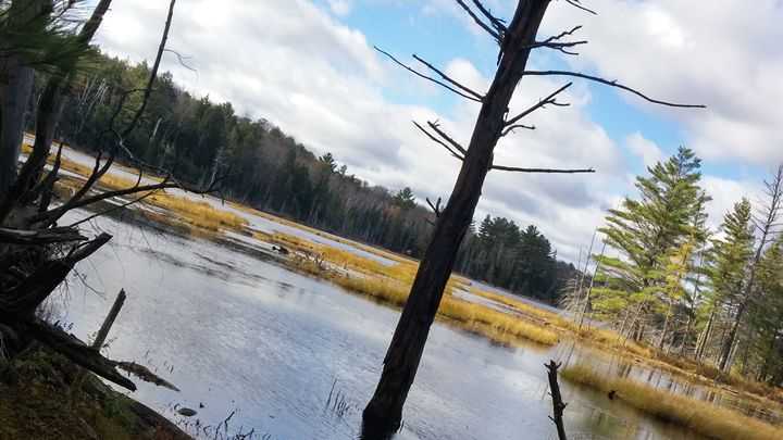 Pond in an angle - iGallery