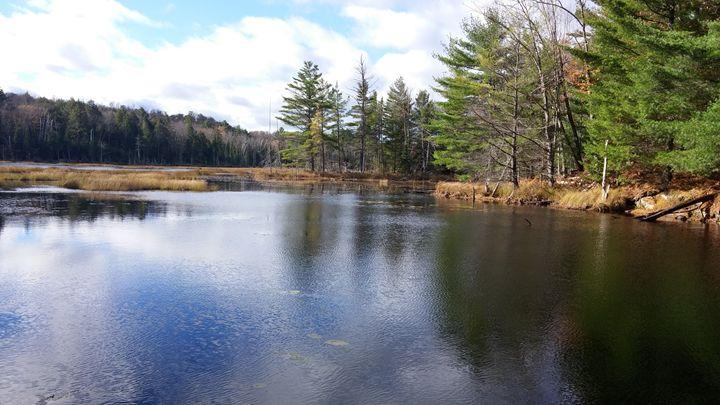 Pond - iGallery