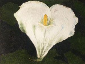 Anna's cala lily