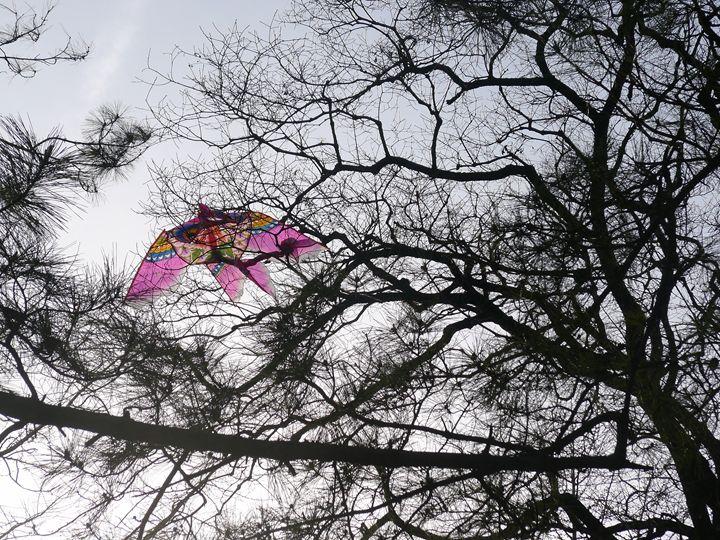 Chinese Kite in the Sky - Pauline K