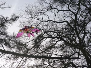 Chinese Kite in the Sky