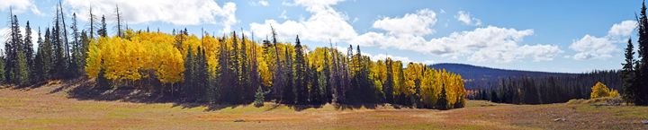 Aspens in the Meadow - Sonya Marie Photography