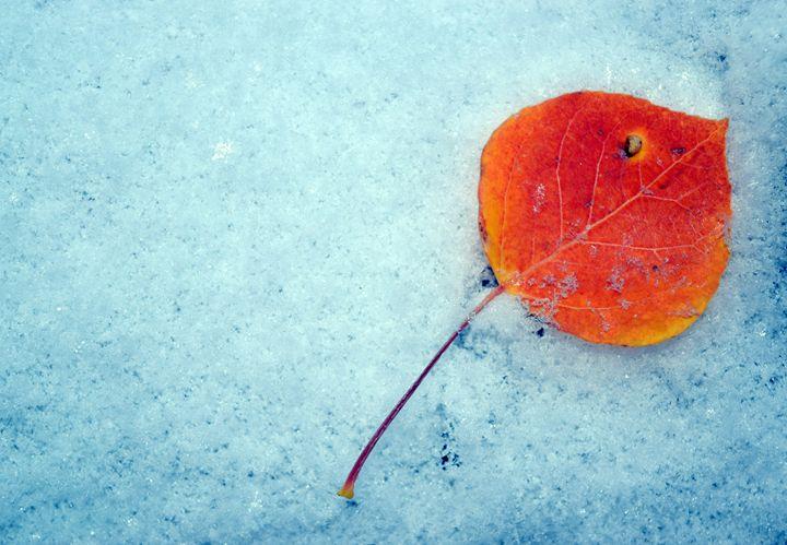 Aspen Snow Leaf - Sonya Marie Photography