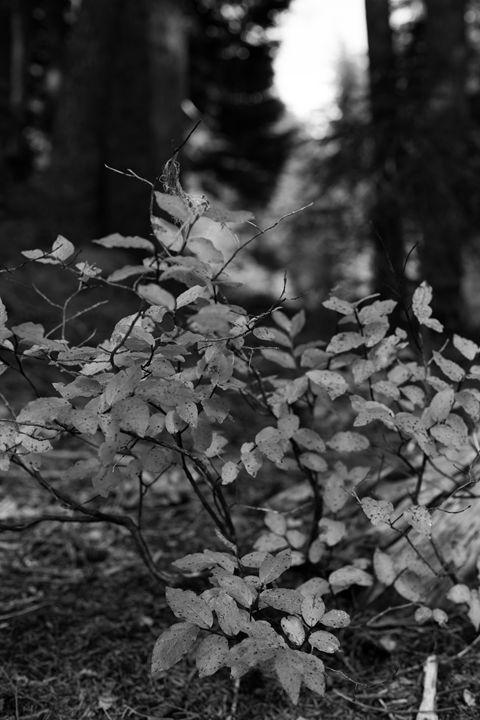 Foliage - Jdeckphoto