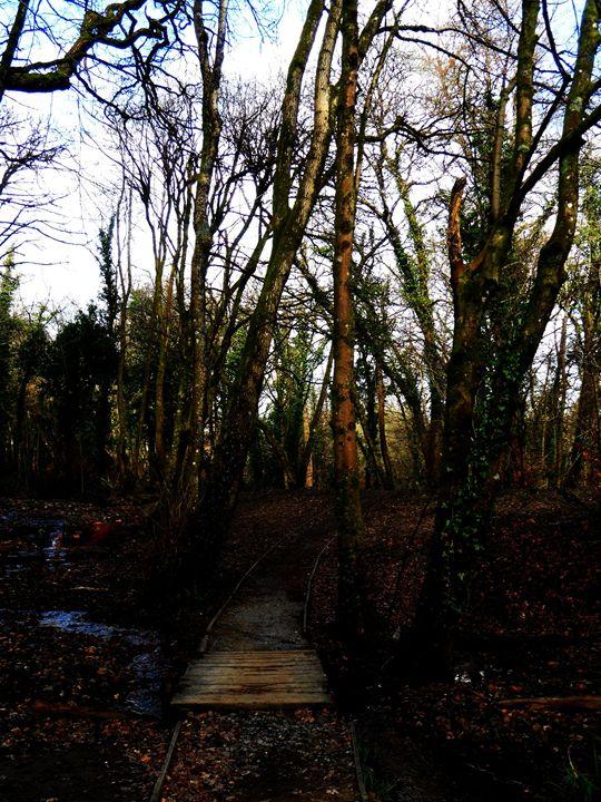 The Trail - Kathleen Faye