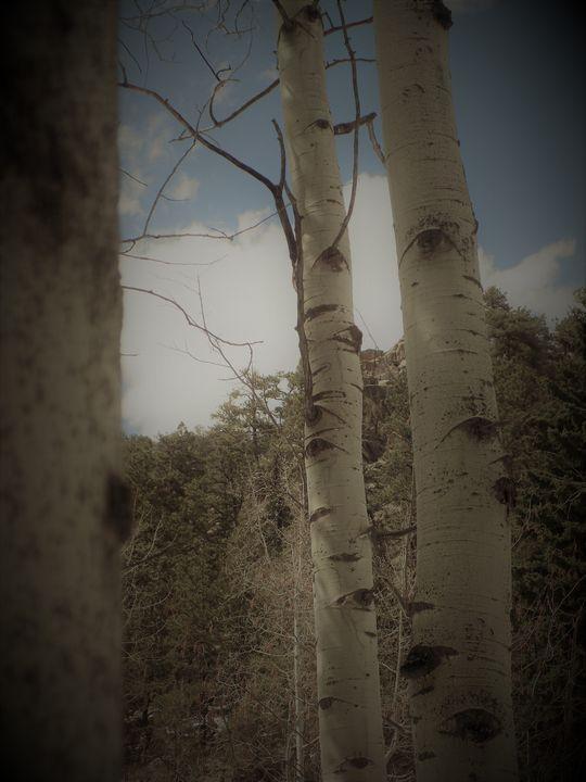 Eyes Upon the Forest - Kodiak Prints