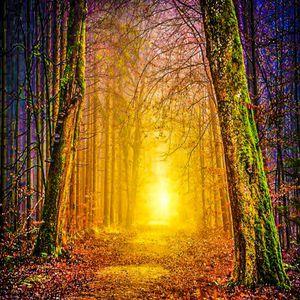 Dream woodlands
