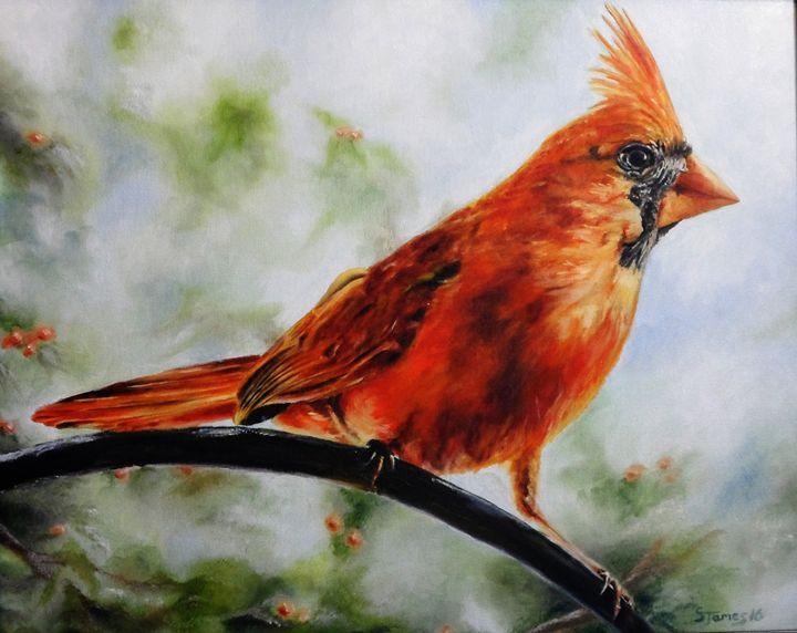 Northern Cardinal - Steve James