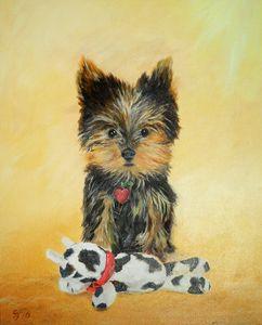Yorkshire Terrier Puppy - Steve James