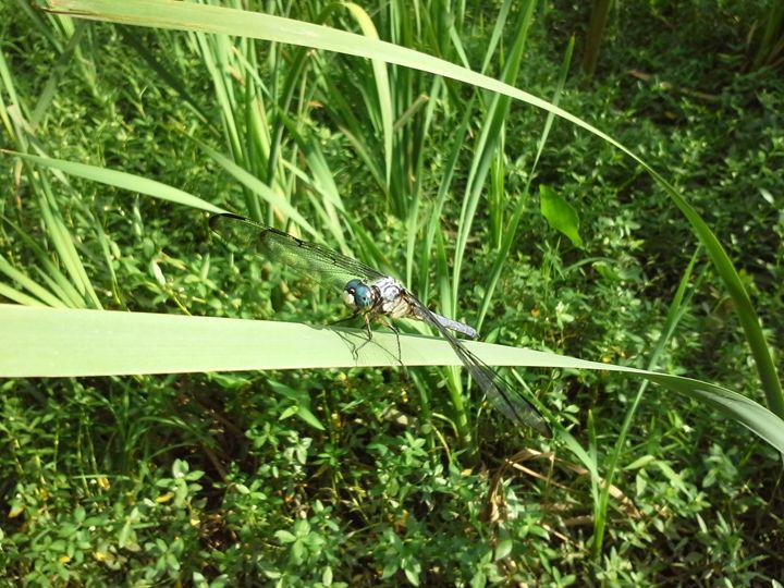dragonfly at rest - random wild life photos