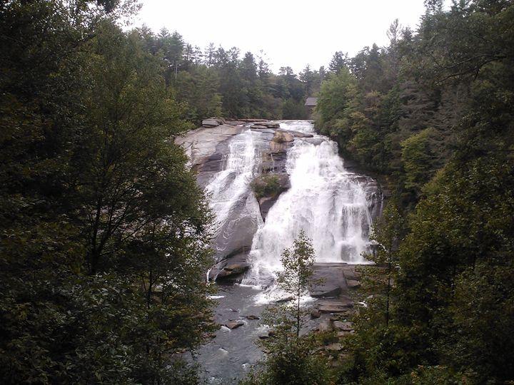waterfall and the trees - random wild life photos
