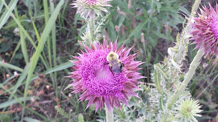 bee feeding on spicky purple flower - random wild life photos