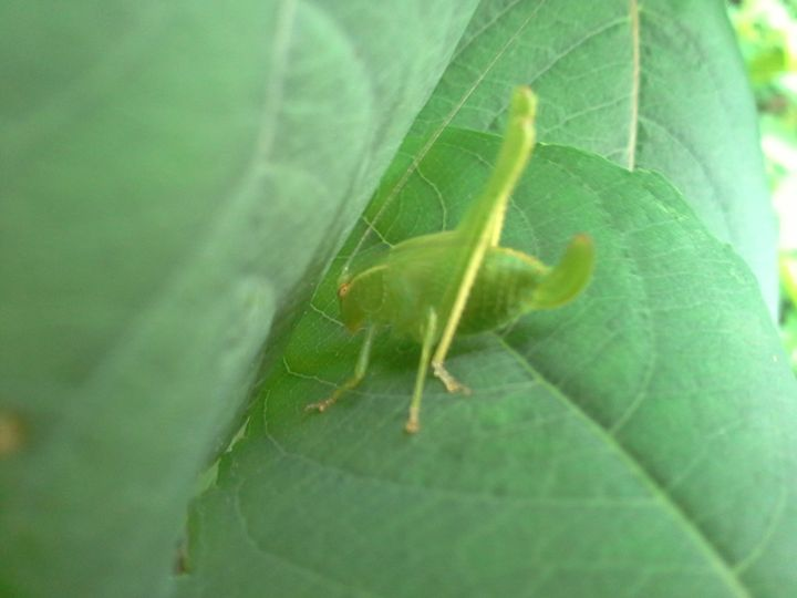 green insect - random wild life photos