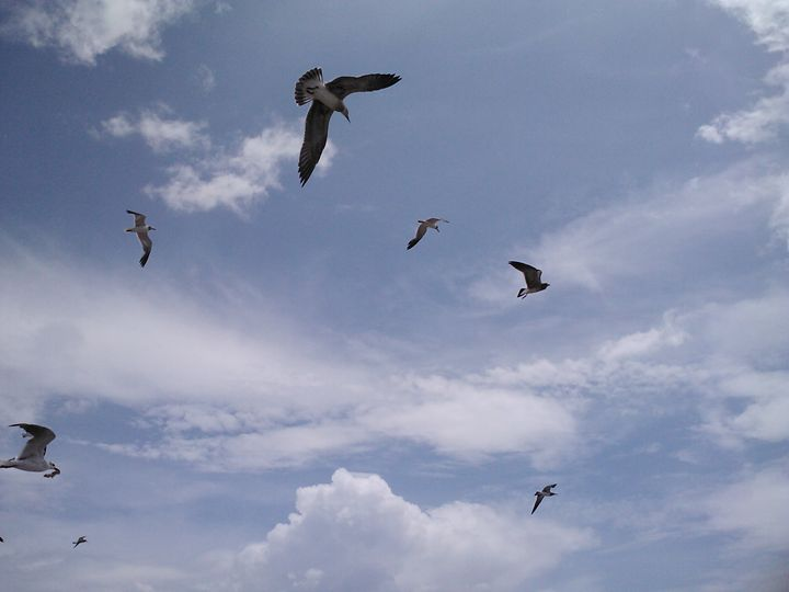 birds in blue sky - random wild life photos