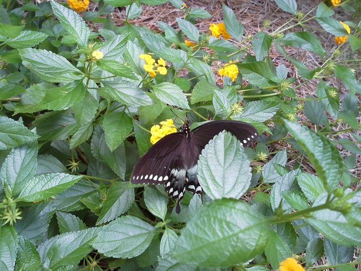 butterfly with yellow flllowers - random wild life photos