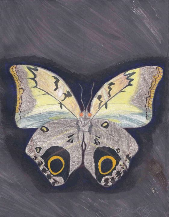 Owl Butterfly - The Secret Gallery of Zalzara the Benevolent