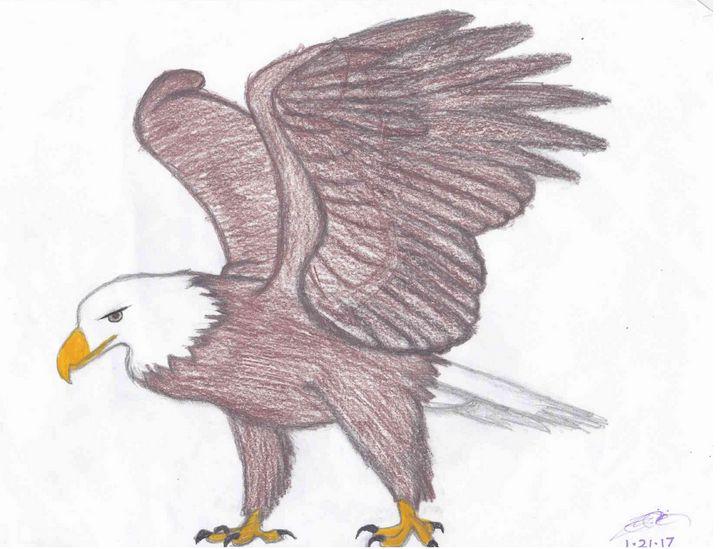 Bald Eagle - The Secret Gallery of Zalzara the Benevolent
