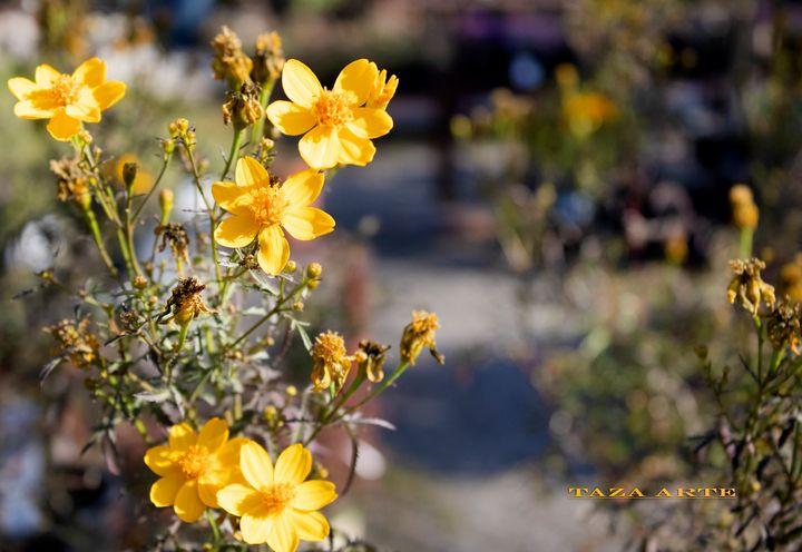 TAZA ARTE Photos - yellow flower - TAZA ARTE
