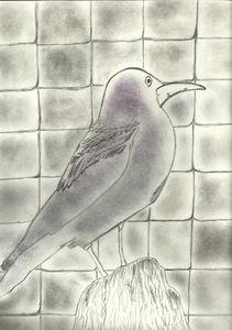 Squared Birdy