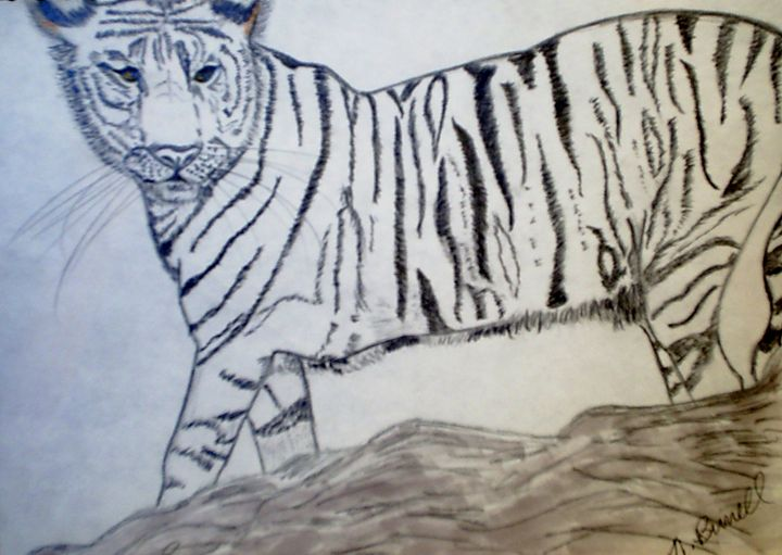 Black and White Tiger - Nicole Burrell