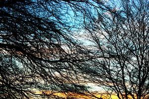 Branching beneath