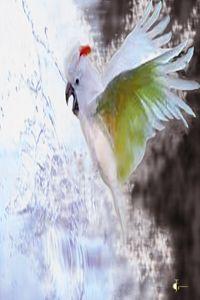 Splash<A wild free exotic bird bath - JGaribaldiart