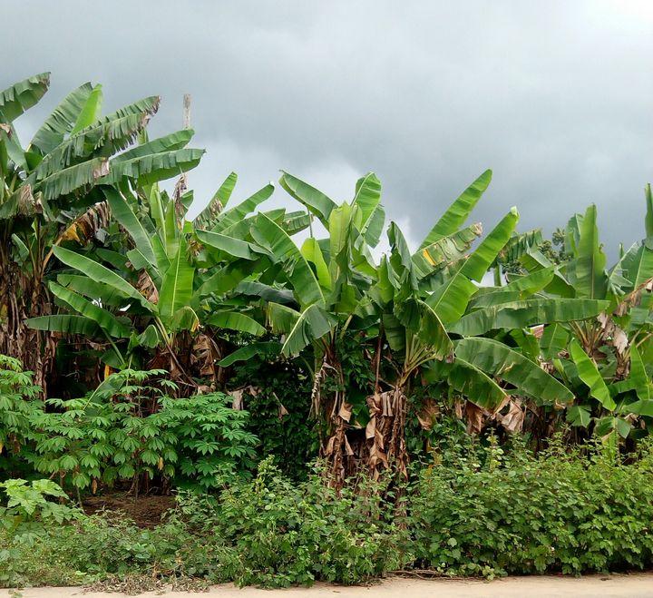 An African Farm - WOJU ART