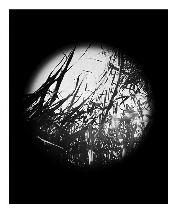 Grass - Pinhole Camera - CJN - Art & Photography