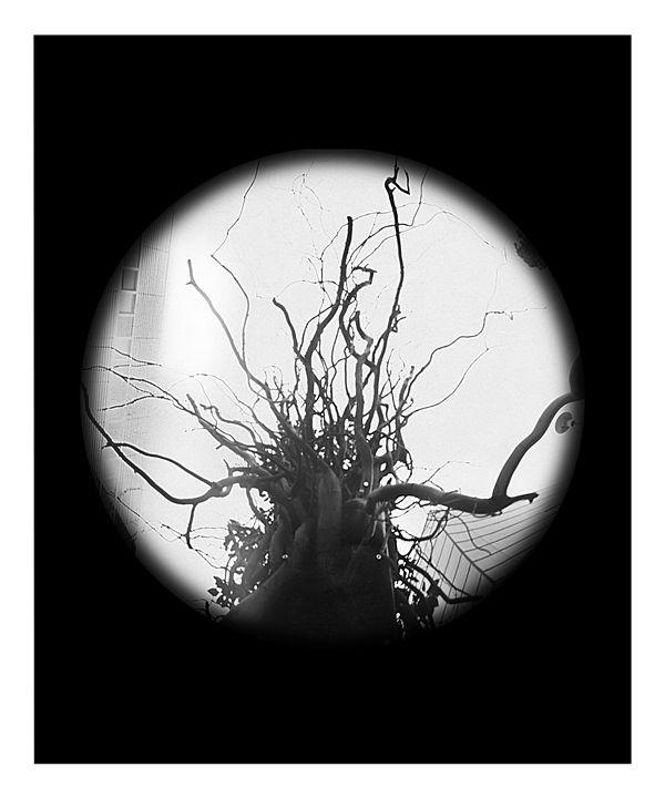 Sculpture - Pinhole Camera - CJN - Art & Photography