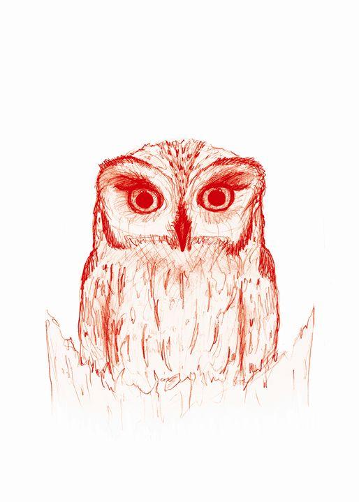 Screech Owl - CJN - Art & Photography
