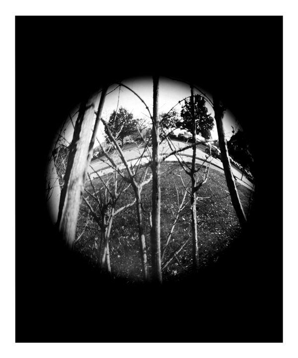 Branches - Pinhole Camera - CJN - Art & Photography