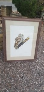 Tawney owl - E. Darrell Smith originals signed