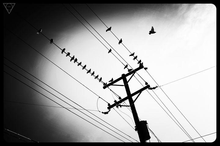 The Birds - alanrubio715