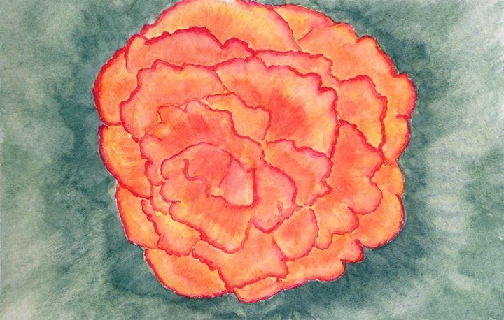 Begonia - Kim Polinder