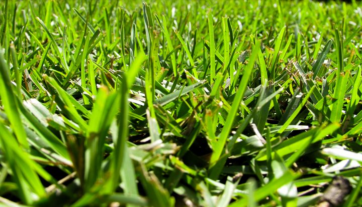 Keep Your Grass Cut - It's Moore Than Photography