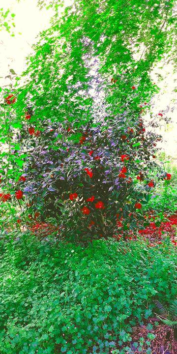 Blooming Nature - Jonny