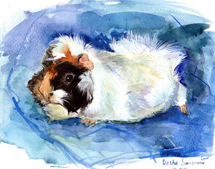 Monya, the guinea pig - Dasha Samsonova