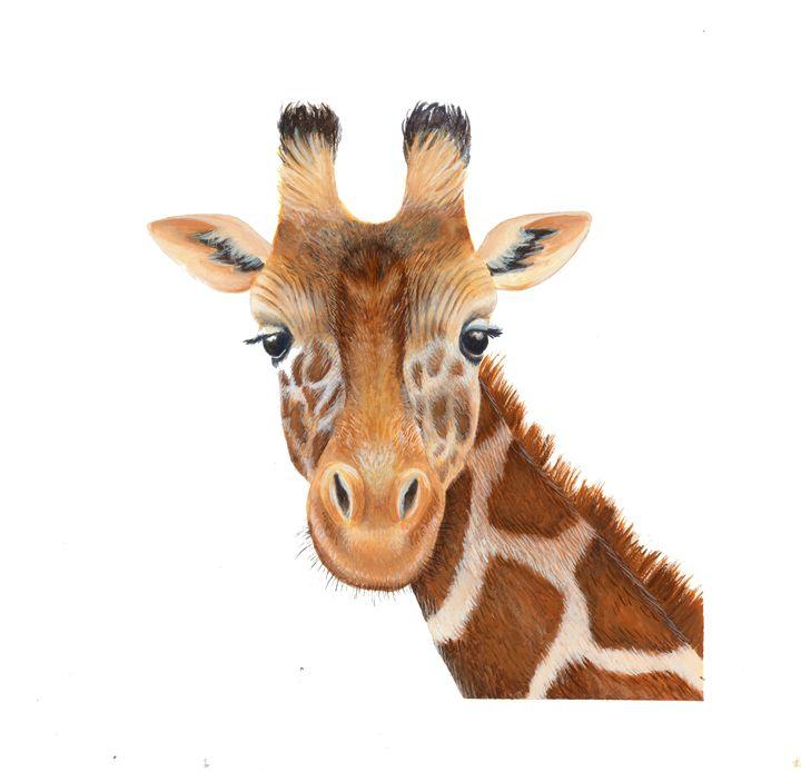 West African Giraffe - Morris Science Illustrations