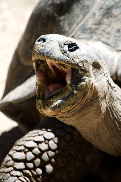 Tortoise - Mollie Backode