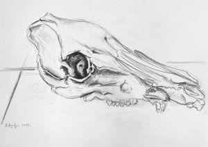 Boar skull I