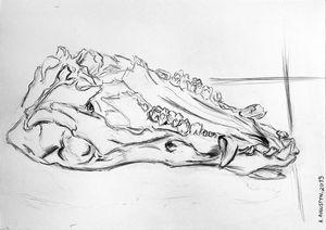 Boar skull II