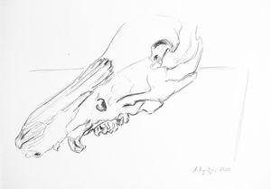 Boar skull IV