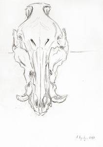 Boar skull III