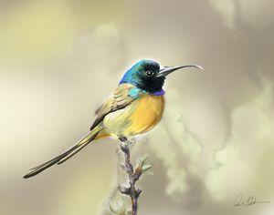 Hand drawing of bird