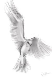 White Kite Descending