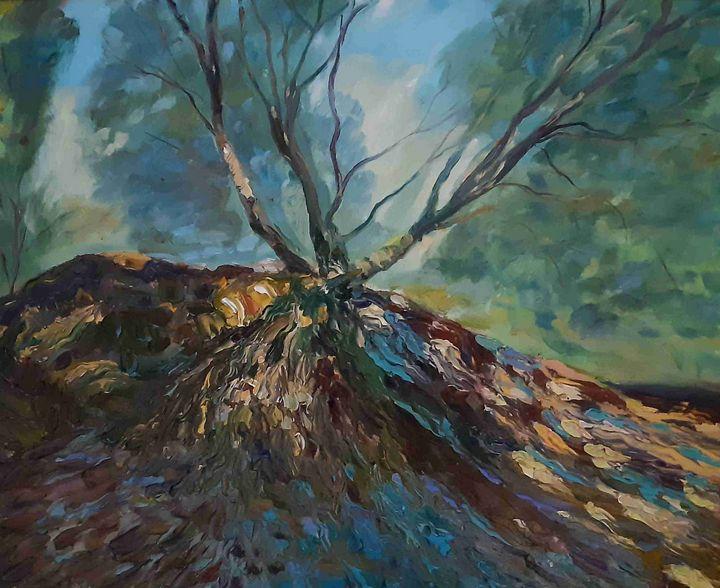 Oak - John Maguire