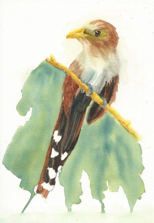 Squirrel cuckoo - REV Originals
