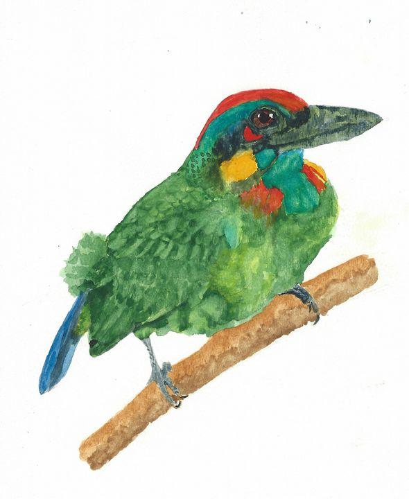 Red-crowned barbet - REV Originals