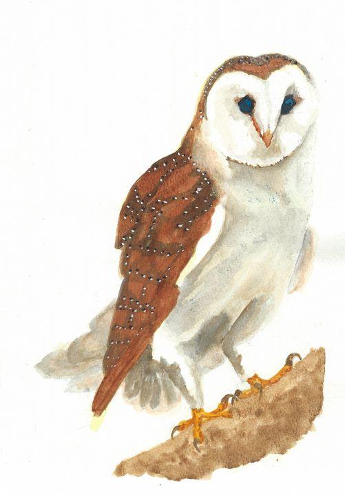 Barn owl - REV Originals